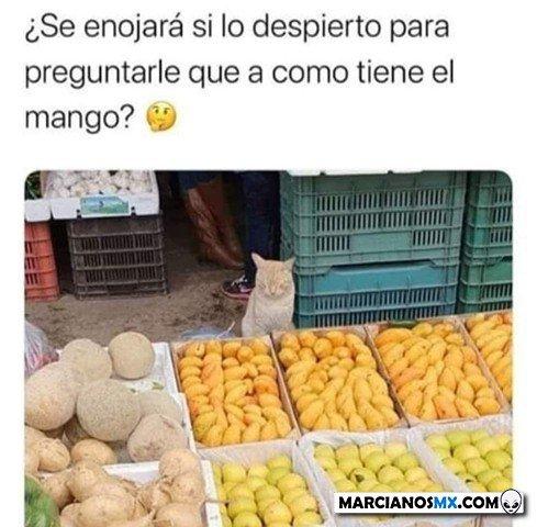Marcianadas 465 150120211020 (11)