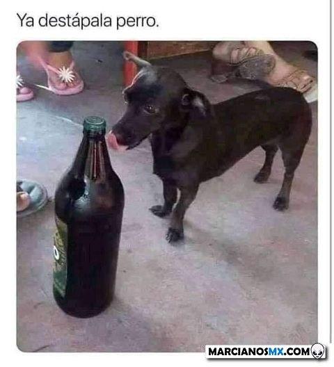 Marcianadas 467 29012021001416 (49)