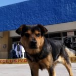 covito el perro tamaulipas (1)