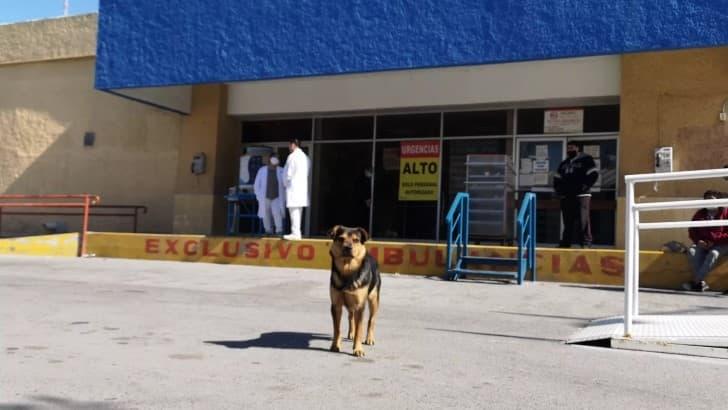 covito el perro tamaulipas (1)(1)