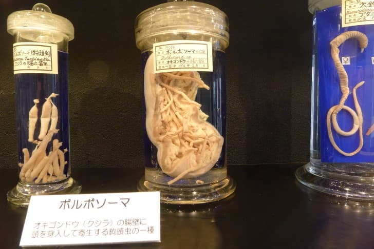 parasitos en un museo