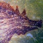 pintura rupestre más antigua en celebes Indonesia (1)