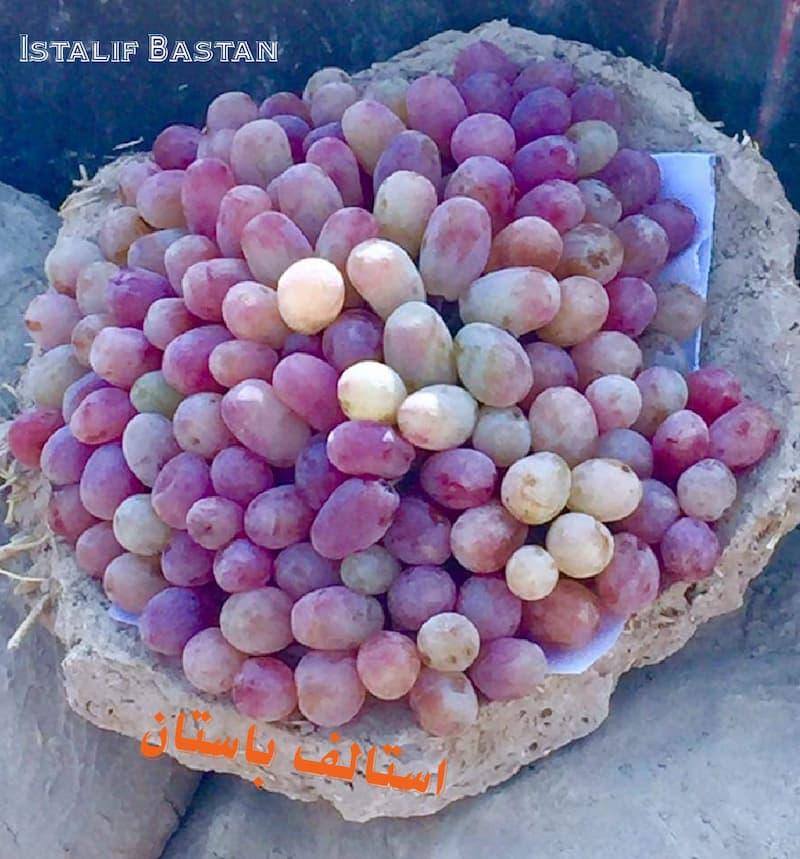 uvas frescas gangina
