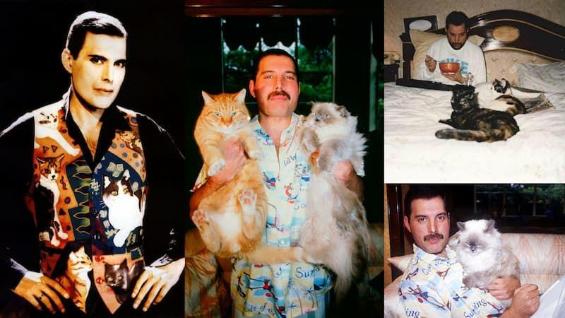 Freddie Mercury y los gatos(1)