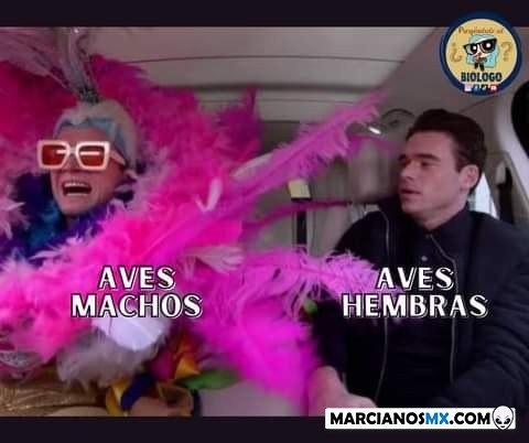 Marcianadas 468 052021001445 (232)