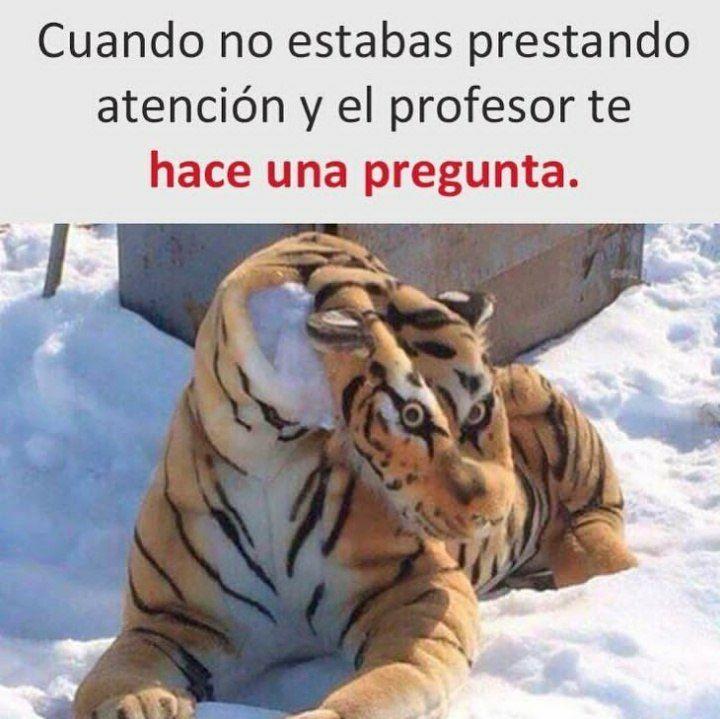 Marcianadas 471 26022021001418 (208)