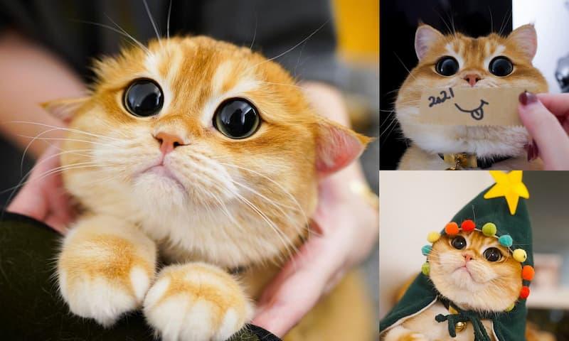 Pisco el gato(1)