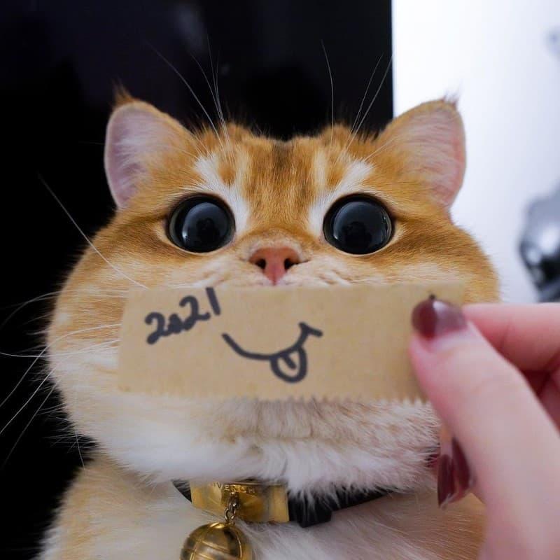 Pisco gato con botas (13)