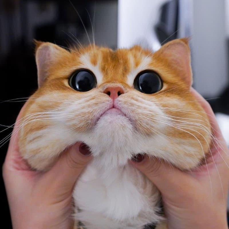 Pisco gato con botas (15)
