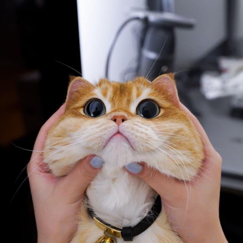 Pisco gato con botas (17)