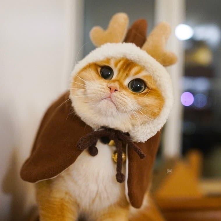 Pisco gato con botas (2)