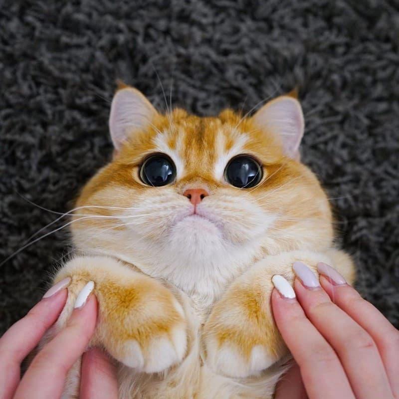 Pisco gato con botas (20)