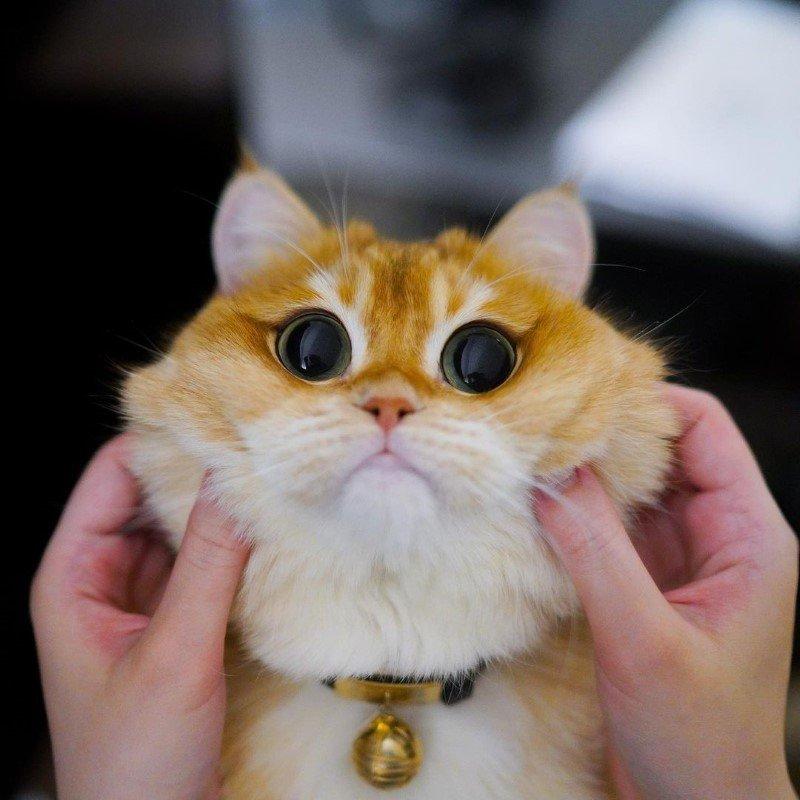Pisco gato con botas (21)