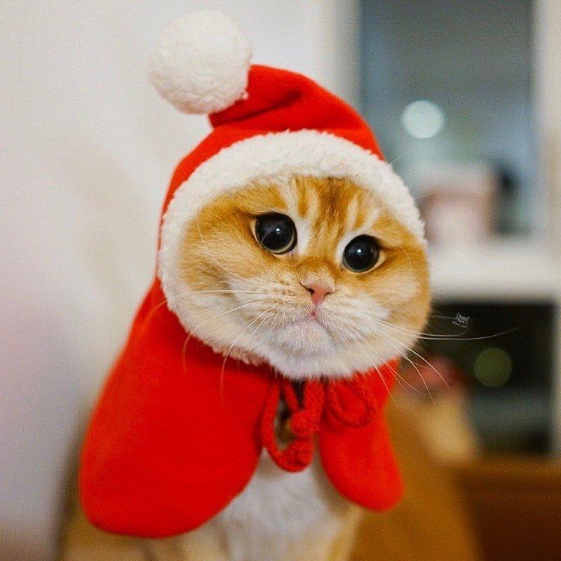 Pisco gato con botas (3)