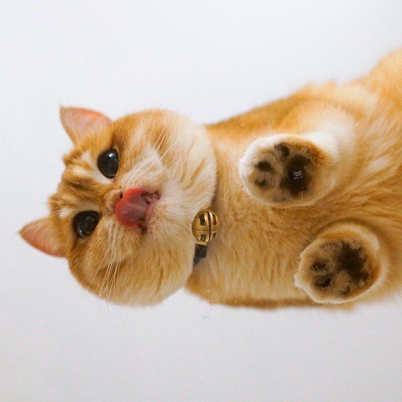 Pisco gato con botas (4)