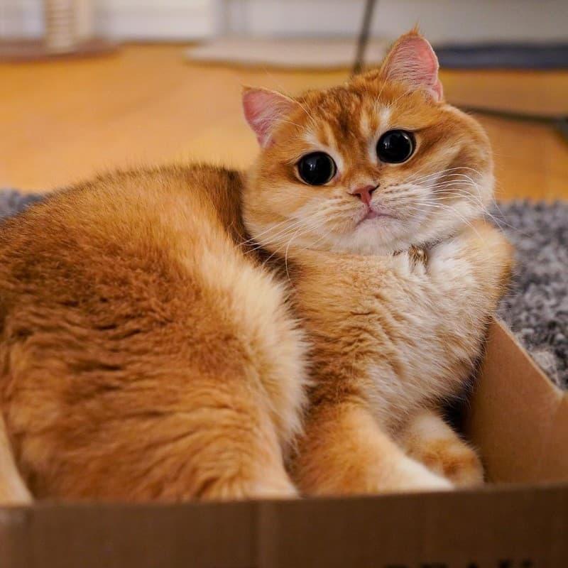 Pisco gato con botas (5)