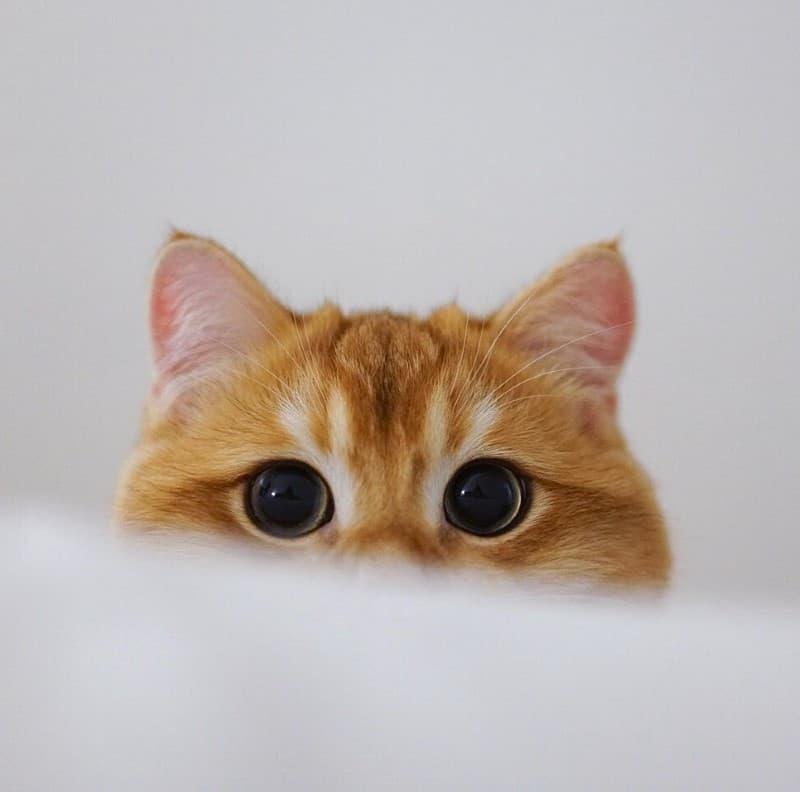 Pisco gato con botas (6)