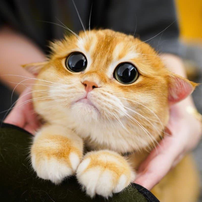 Pisco gato con botas (8)
