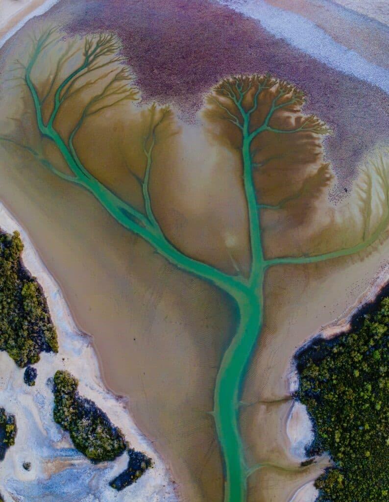 lago Cakora arbol de la vida en Australia (2)