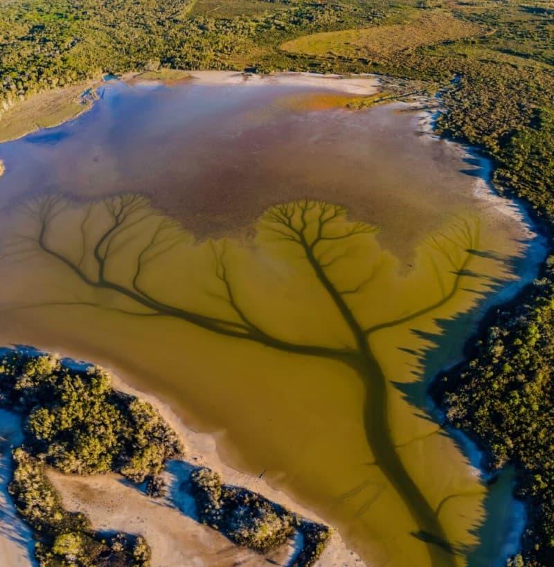 lago Cakora arbol de la vida en Australia (7)