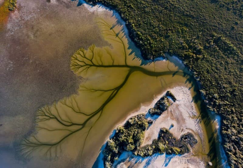 lago Cakora arbol de la vida en Australia (9)