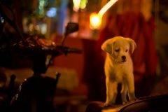 perro abandonado(1)