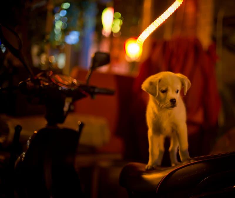perro abandonado(2)