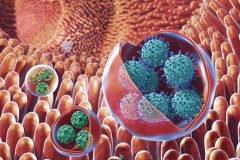 virus en el estomago humano