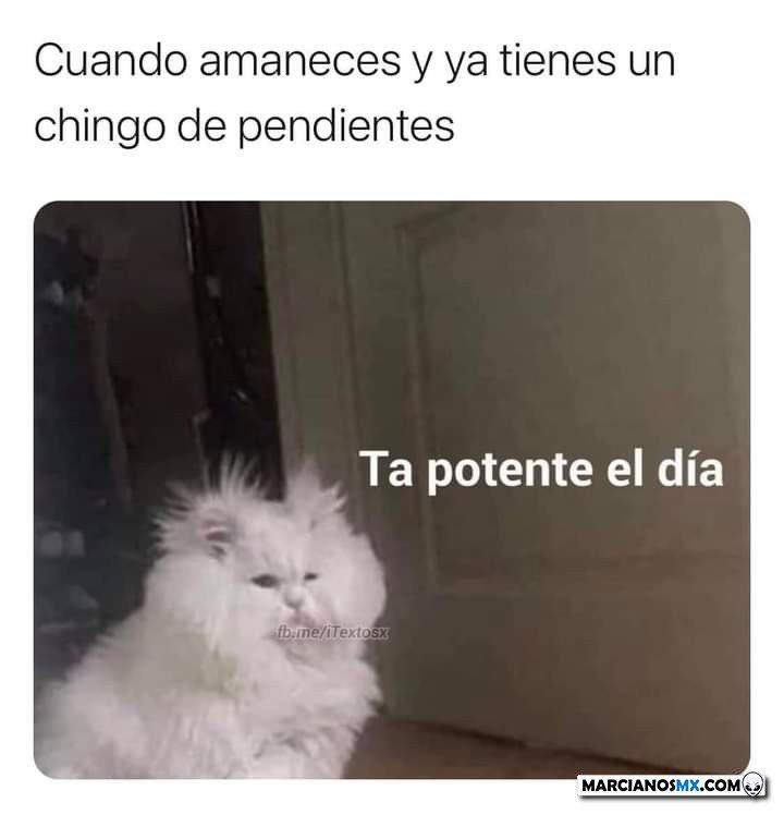 Marcianadas 472 05032021001530 (121)