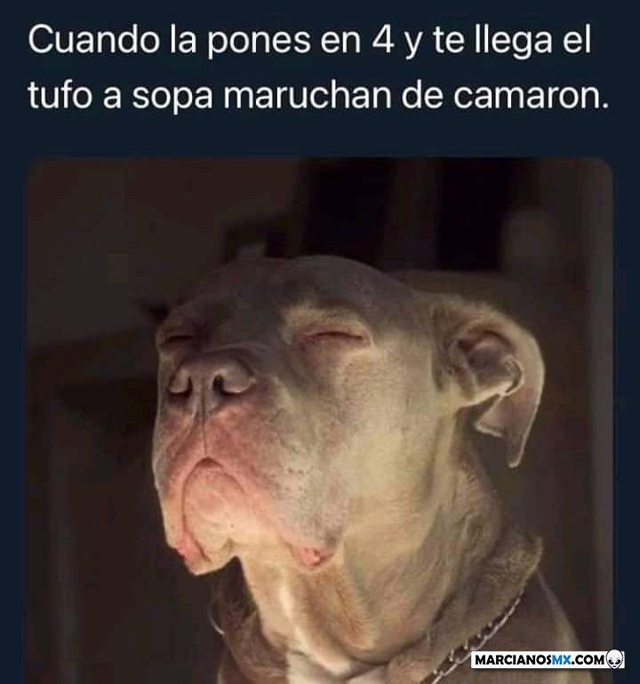 Marcianadas 473 12032021001806 (97)