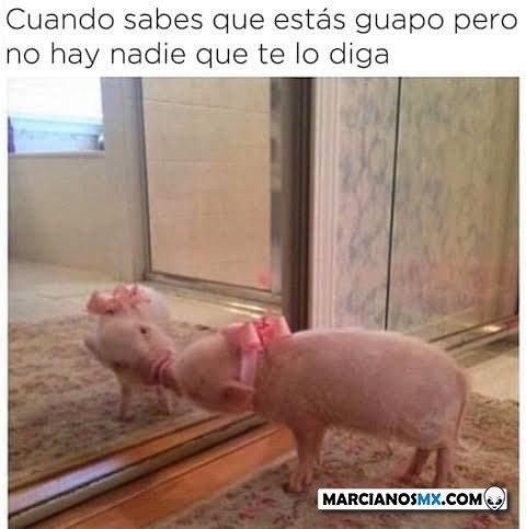 Marcianadas 475 26032021001447 (16)