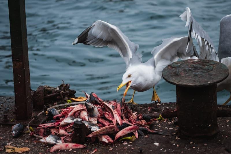 alimento en la basura