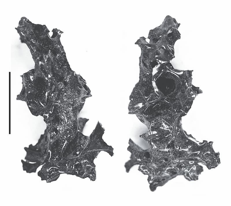 cerebro humano vitrificado en herculano