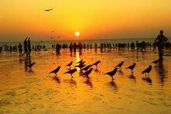 cuervos en la playa aterdecer