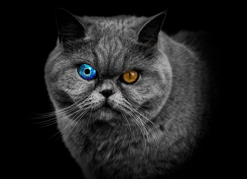 gato cyborg(1)