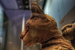 Gatos en el Antiguo Egipto