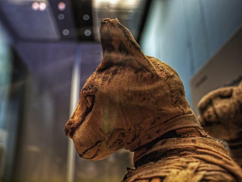 Gatos en el Antiguo Egipto(1)