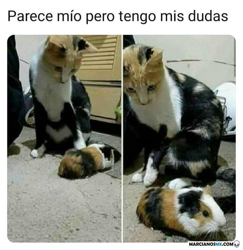 Marcianadas 476 020420210013399 (206)