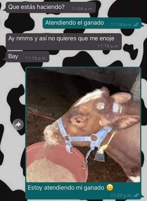 Marcianadas 476 020420210013399 (25)