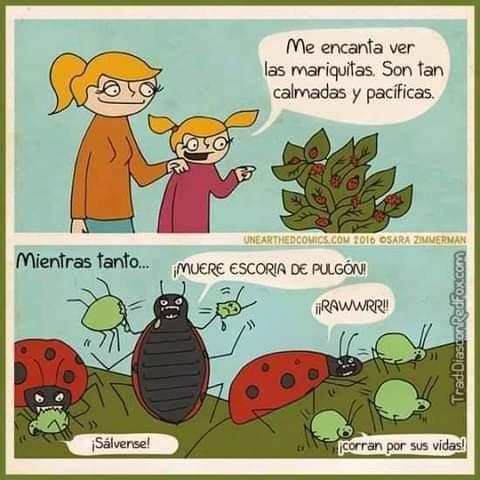 Marcianadas 476 020420210013399 (59)