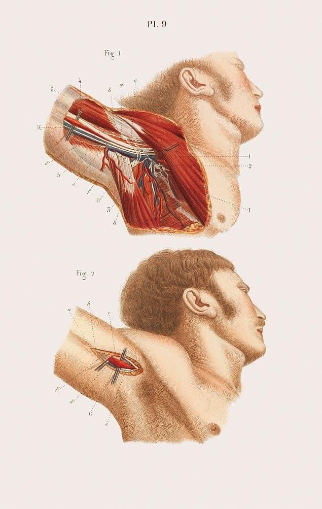 anatomia de la axila