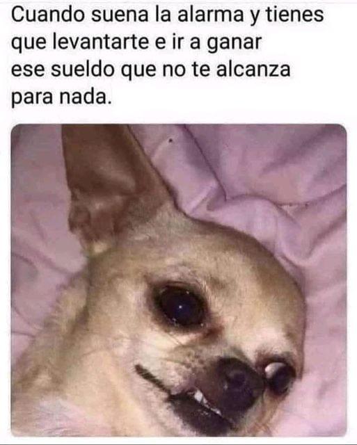 Marcianadas 483 21052021001253 (246)