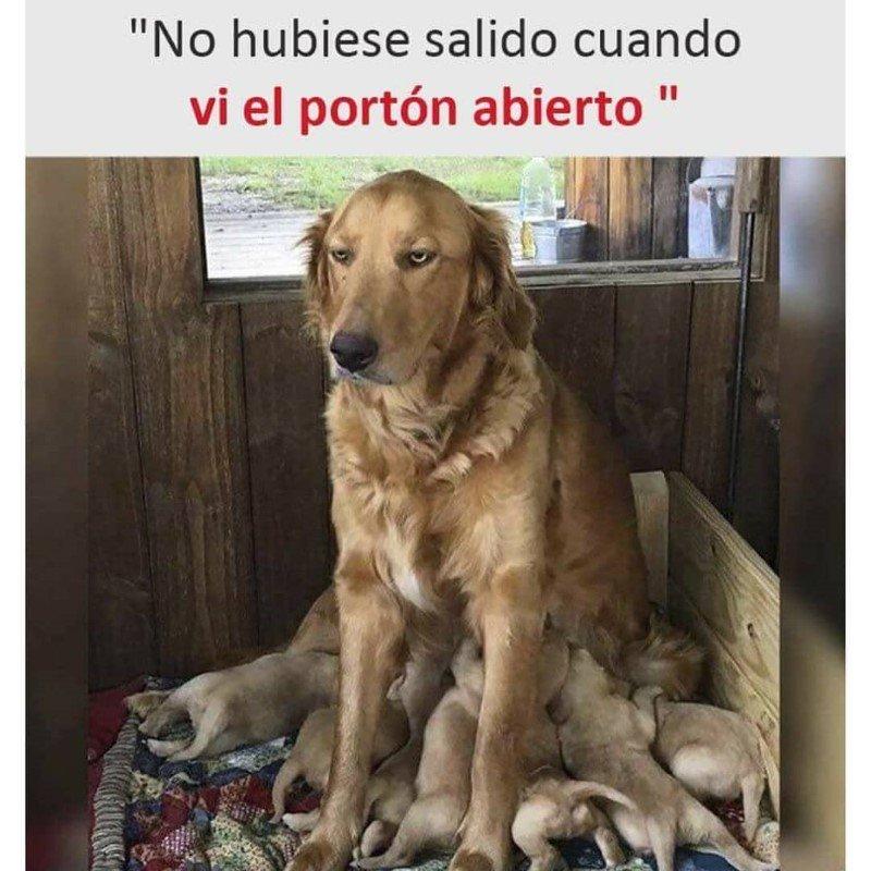 Marcianadas 484 28052021001230 (200)