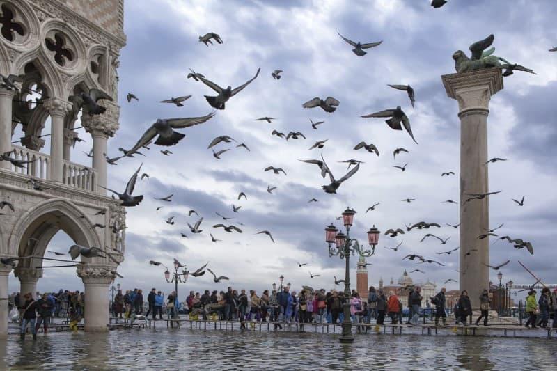 Palomas en Venecia