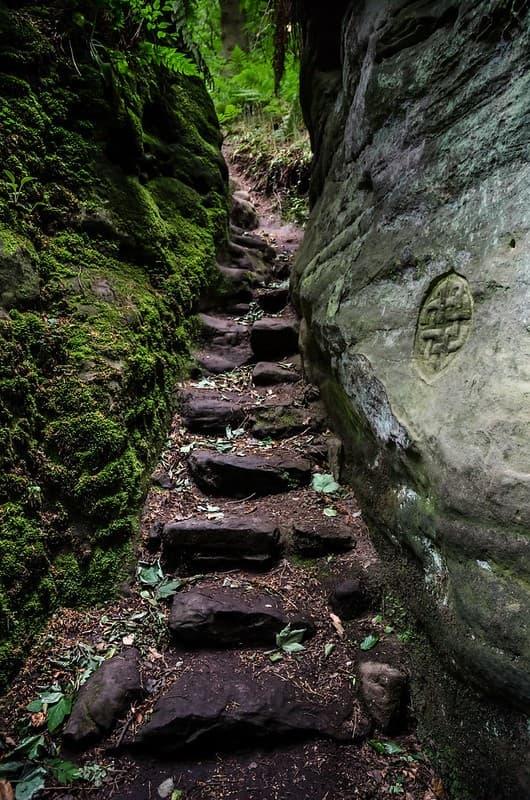 escaleras en medio de los bosques