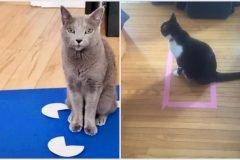 gatos ilusiones visuales