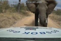embestido por elefante
