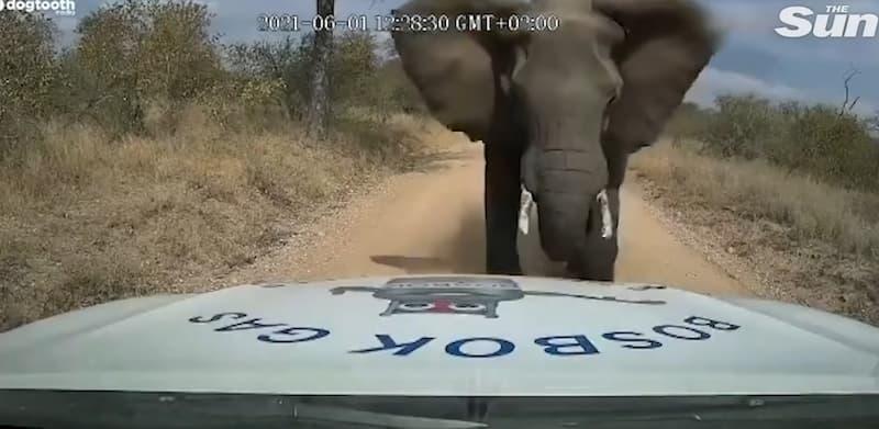 embestido por elefante(1)