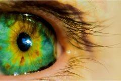 pupila ligada a inteligencia humana