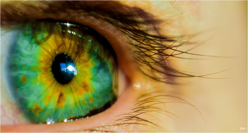 pupila ligada a inteligencia humana(1)